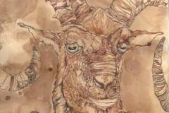 Muflone in contemplazione ° 2012 . inchiostro su carta anticata