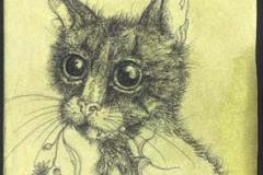 Priscilla ° 2009 ° inchiostro su carta tinta