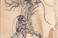 Cerambici e albero .2011. inchiostro su carta invecchiata