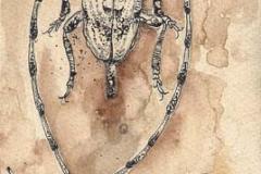 Monochamus sartor e figlio . 2009 . penna su carta e caffe