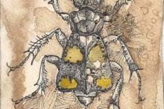 Necrophorus Vespilloides pensieroso . 2011 . penna e tempera su carta