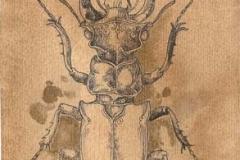 cervolante masculo . 2010 inchiostro su carta e caffe'