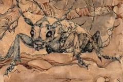 insetto e baccelli . 2012 . inchiostro su carta preparata col caffe\'